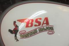 BSA-white-3