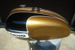 triumph-gold-black-1